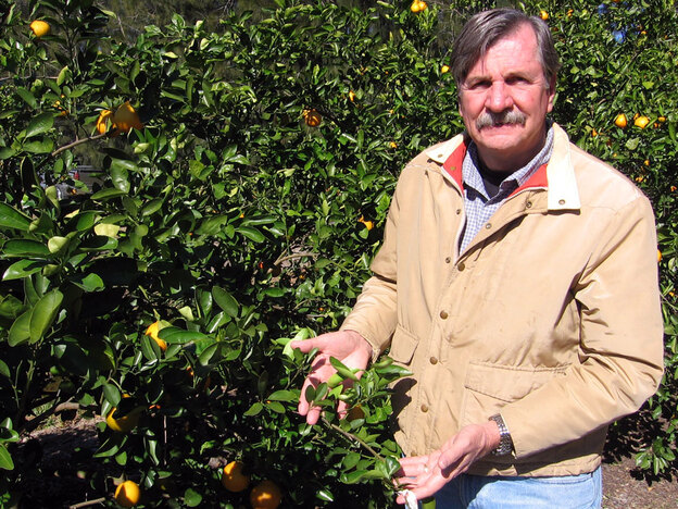 Bob Adair, director of the Florida Research Center for Agricultural Sustainability, in his citrus grove in Vero Beach, Fla.