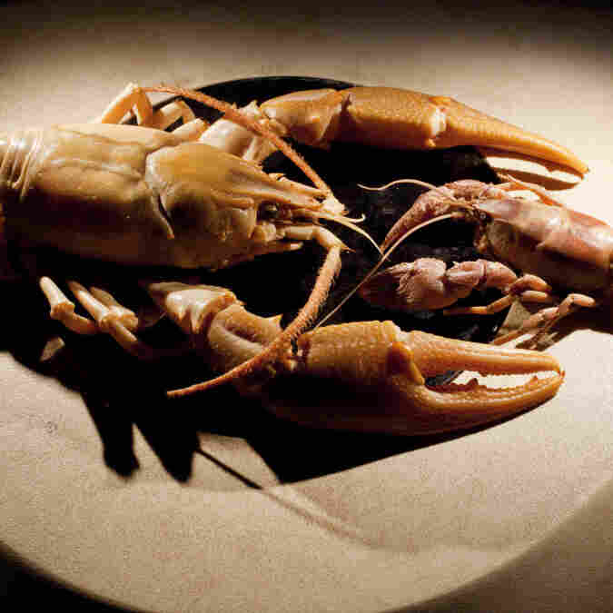 New 'Giant' Species Of Crayfish Found In Tennessee Creek