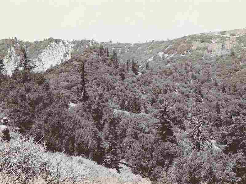 The United States Forest service set out to document the flora in California in the 1920s and 1930s. Photos like this one, showing vegetation, were used in a new study to measure how plant species have responded to a changing climate.