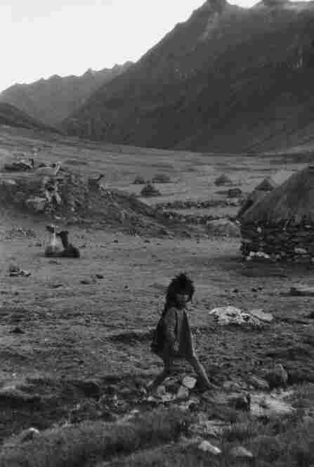 Kiku, Q'eros, Peru, 1957