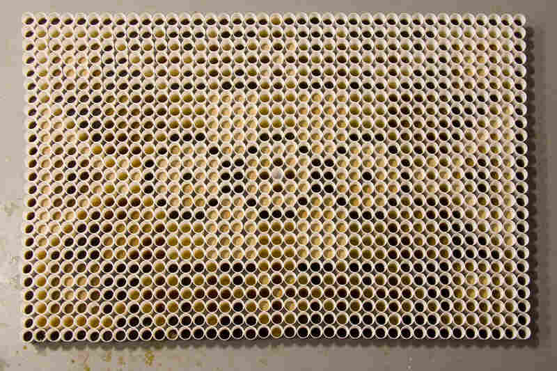 """The trio spent two days making this carpet from cups filled with """"coffee, coffee with milk, coffee with more milk, tea and very strong tea,"""" according to their website."""