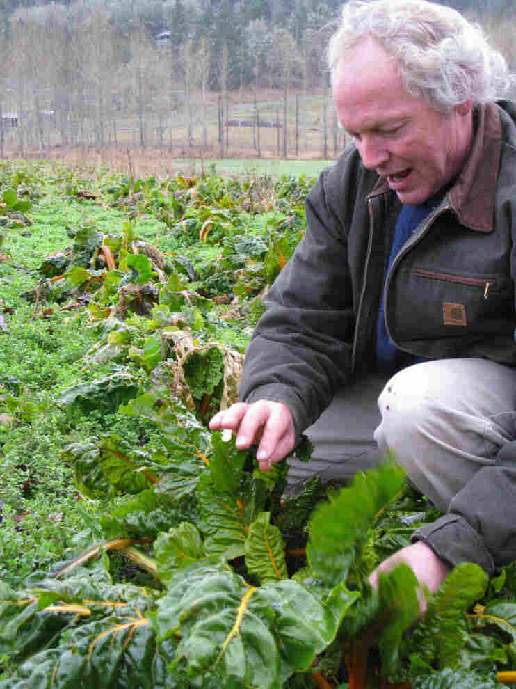 """This valley is not big enough to have genetically engineered crops and normal crops growing together without cross contamination happening,"" says Frank Morton, an organic farmer who grows Swiss chard for seed."