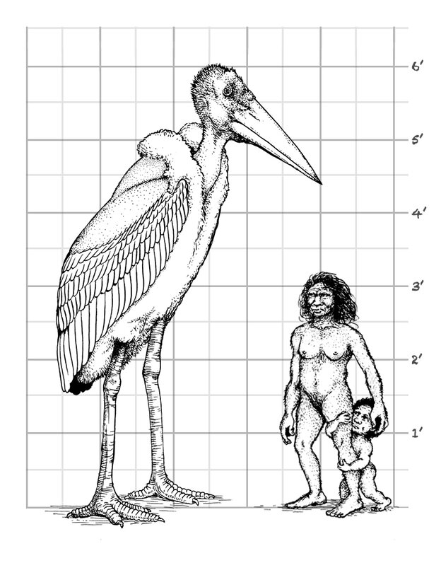 The 6-foot stork, Leptoptilos robustus, compared to the hobbits of Flores.