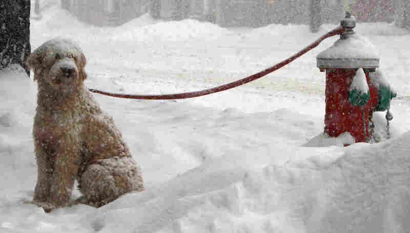 A dog named Muldoon waits in the snow for its owner in Barre, Vt. A huge storm brought freezing rain and blizzard conditions to more than 30 states.