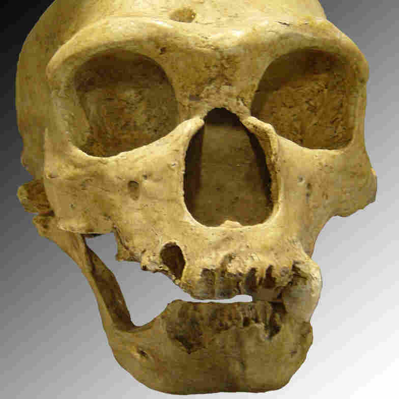 Leaky Replacement:  Human, Neanderthal And Denisovan Blends