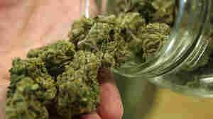 Marijuana buds tumble out of a jar.