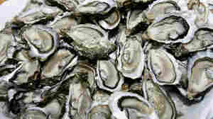 Wild Oyster Reef Death Doesn't Equal A Bivalve Shortage
