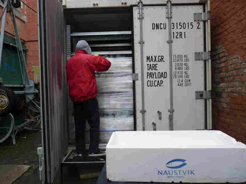 They are transported in refrigerated containers to the intervention sites.