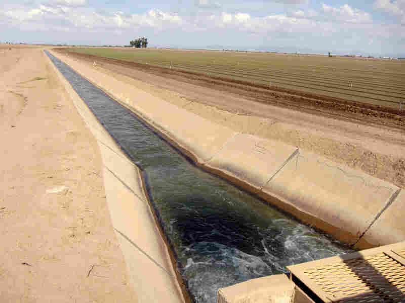 An irrigation channel brings Colorado River water from the All American Canal to a newly planted lettuce field.