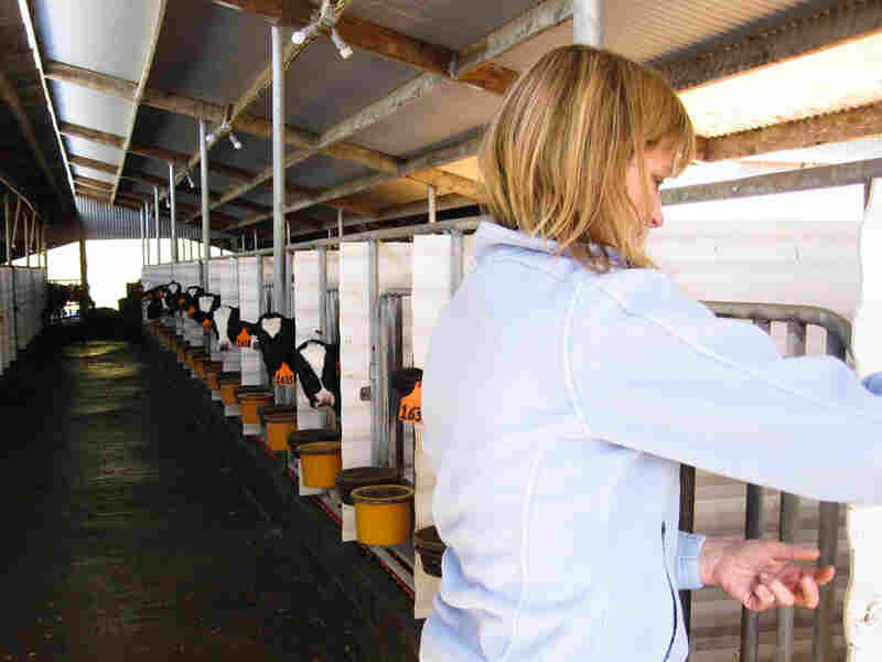 Jill Giacomini Basch visits some of her farm's Holstein calves.
