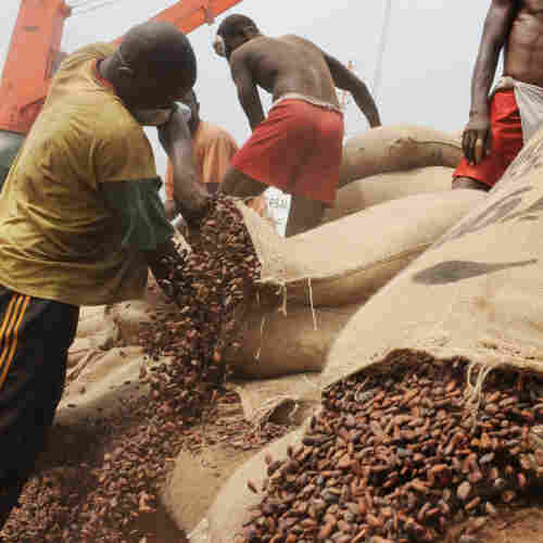 Ivorian workers empty bags of cocoa beans into a container Jan. 18 at the Port of Abidjan, where 80 percent of Ivory Coast's exports transit.