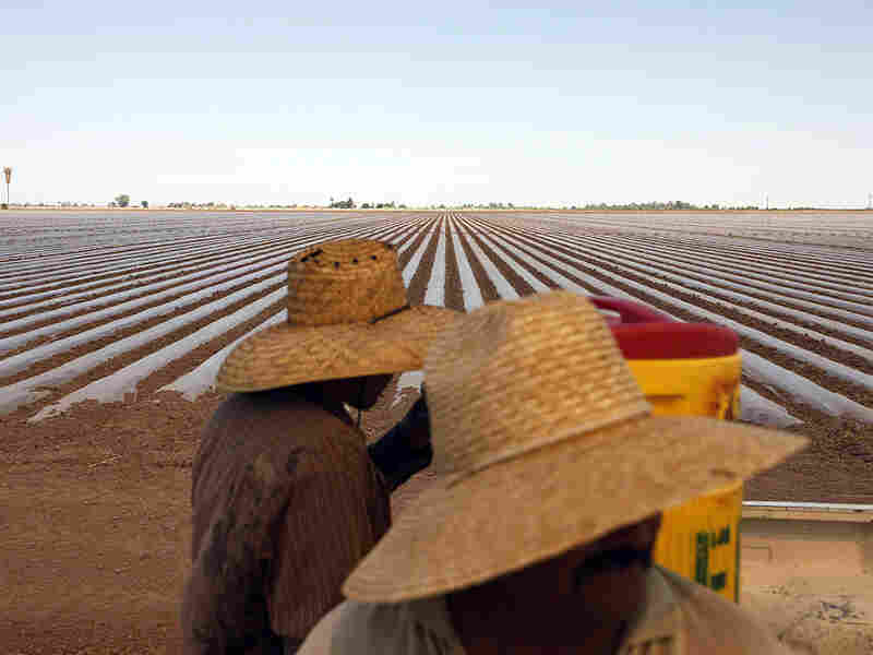 Workers prepare a field for planting in Imperial Valley, where farms have traditionally used flood-and-furrow techniques. Experts claim the process wastes vast quanties of precious water.