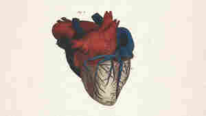 Pump On: A 'Sublime' Biography Of The Human Heart