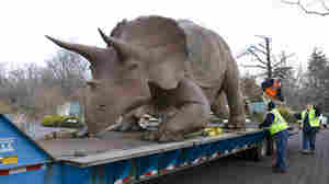 "The ""Uncle Beazley"" fiberglass sculpture is placed on a flatbed truck at the National Zoo, on Feb. 16. Donated to the Smithsonian in 1967, the triceratops statue is getting a facelift after many years of being loved."