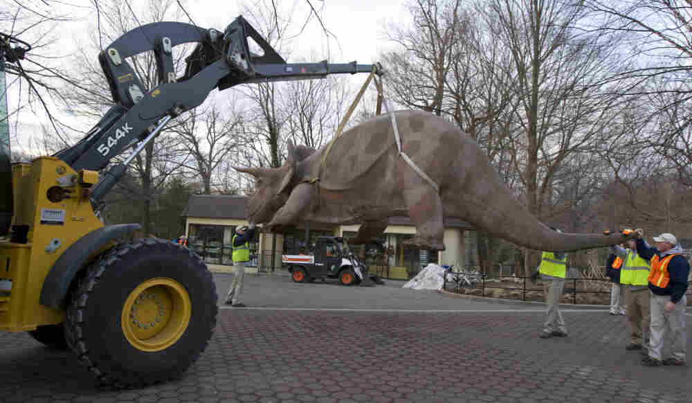 """""""Uncle Beazley"""" is hoisted onto a flatbed truck at the National Zoo."""