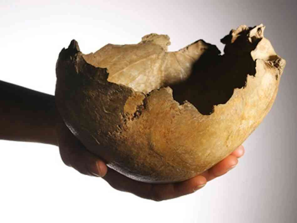 One of the human skull-cups made by ice age Britons 14,700 years ago unearth
