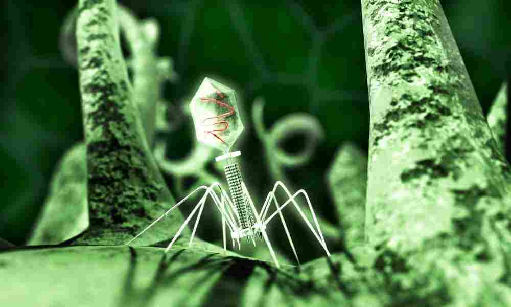 A T4 Phage attacks an E. coli bacterium.