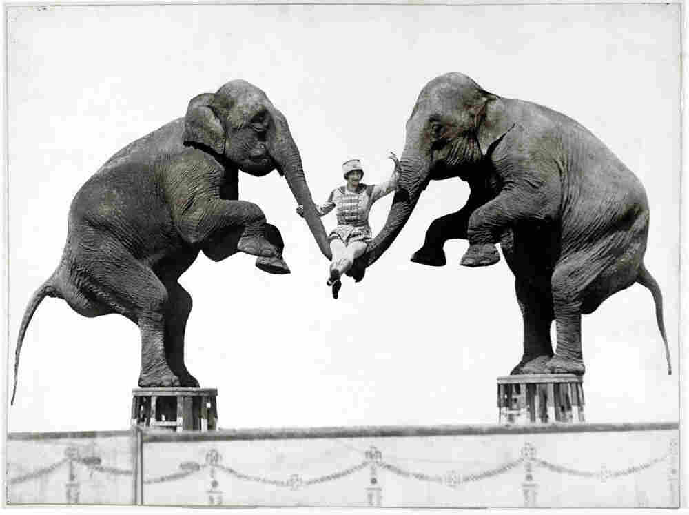 An unknown woman swings on elephant trunks, originally published in National Geographic in Oct. 1931