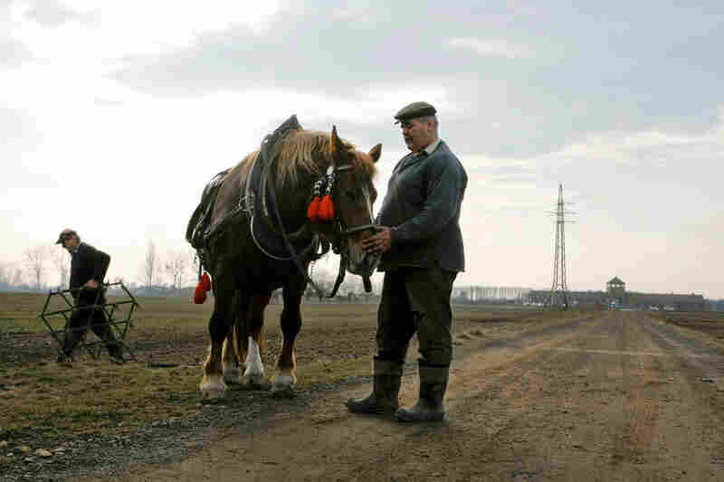 "A farmer releases the reigns from his work horse after plowing his field in front of the Birkenau ""death gate."""