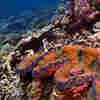 World's Coral Reefs Facing Serious Threats
