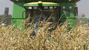 A farmer harvests a corn crop near Monticello, Ill., last September. The price of wheat and corn jumped 70 percent in the second half of 2010.