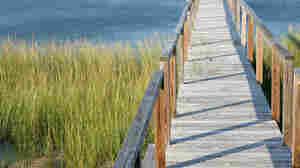 pier along cape cod