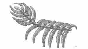 Reconstruction of Diania cactiformis.