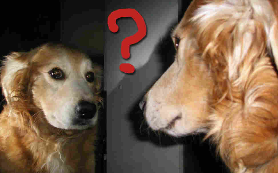 Can dogs recognize themselves in the mirror?