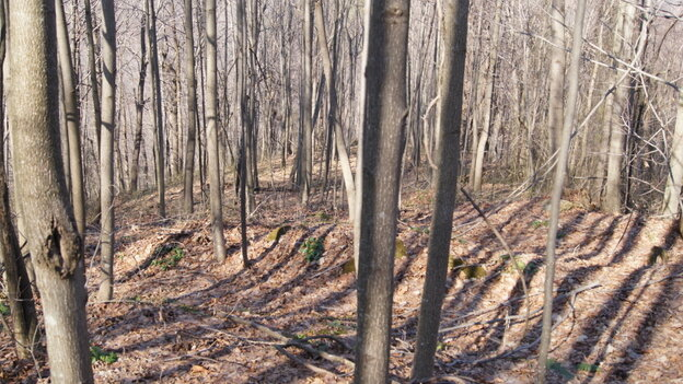 One of the many trenches on Blair Mountain where coal company operatives fired at protesting miners.
