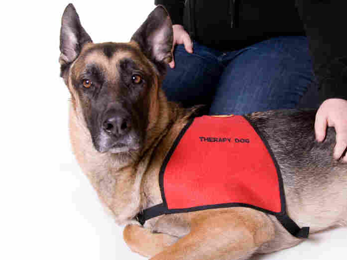 "Most service animals undergo intensive training before receiving certification. Some pet owners are now going online to ""register"" their companion as ""service animals."""