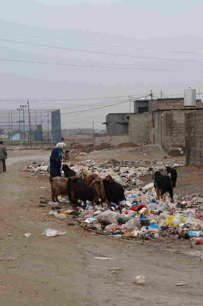 Goats feed on trash in a slum in Kirkuk.