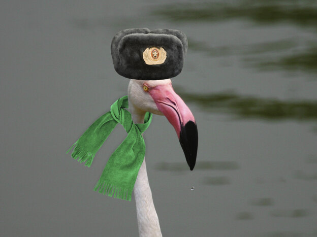 An illustration of a flamingo in Siberia.