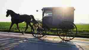The Amish Bernie Madoff