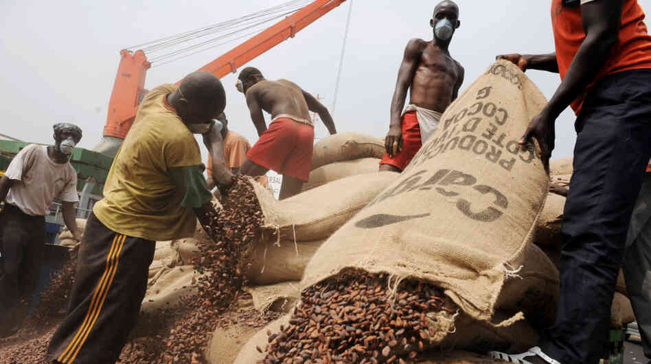 Ivorian workers empty bags of cocoa beans in Abidjan in January, 2011.