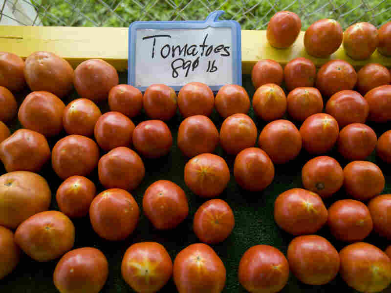 Tomatoes lined up for sale at Sunshine Produce in 2008 in St. Petersburg, Florida, when the Food and Drug Administration had sent officials to Florida and Mexico to investigate tomato farms as part of a salmonella probe.