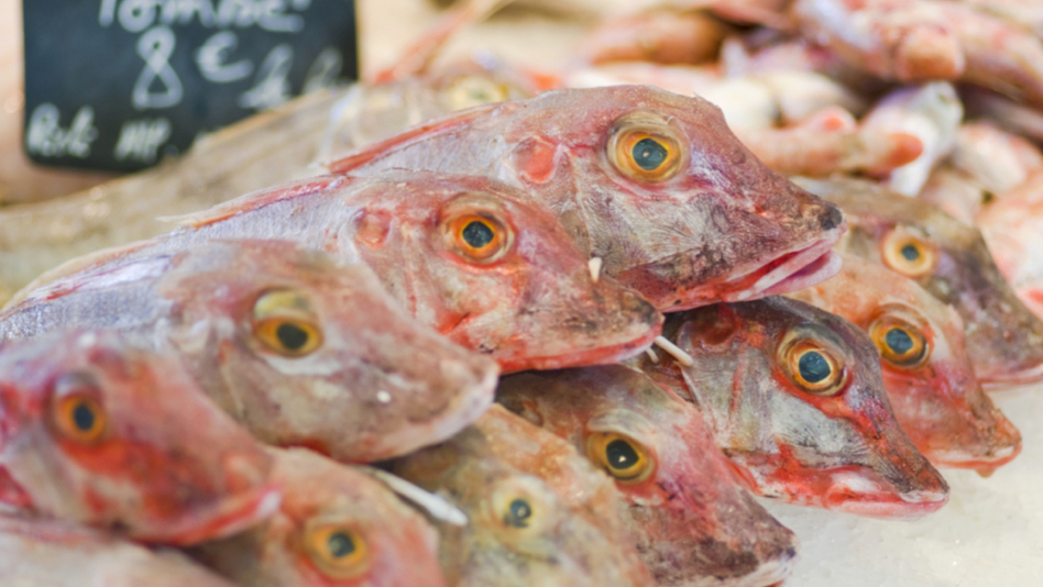 Eating a few mullet like these could be good for your eyes. (iStockphoto.com)