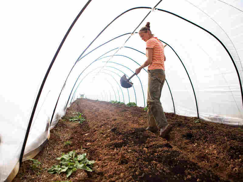 Katherine Stewart spreads compost as the farm prepares to start a new crop of greens.