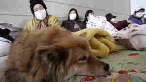 A family takes a rest with their dog at a shelter at Minamisanriku town, Miyagi Prefecture, northern Japan on March 14.