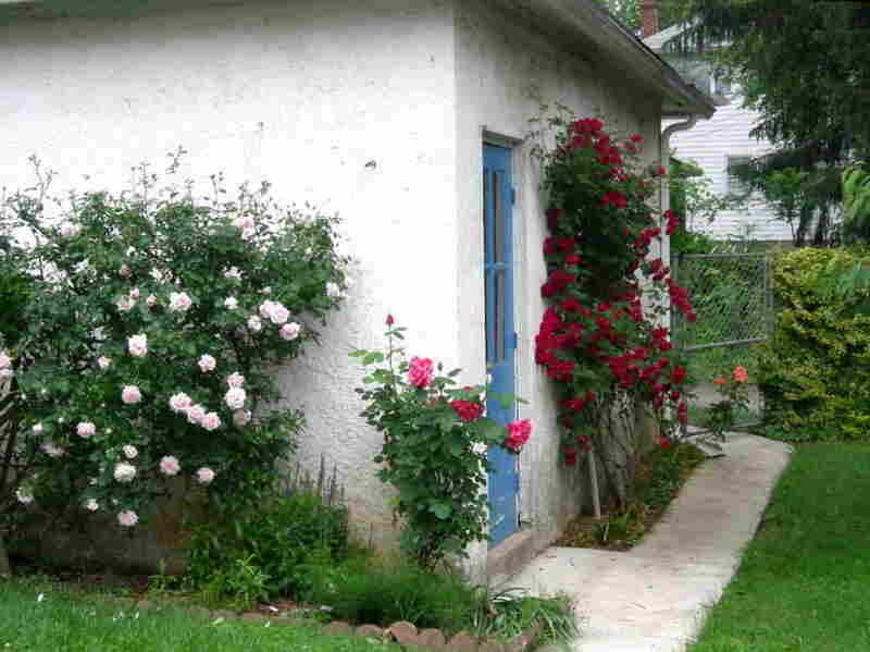 The landscaped backyard of Farai Chideya's family home in Baltimore.