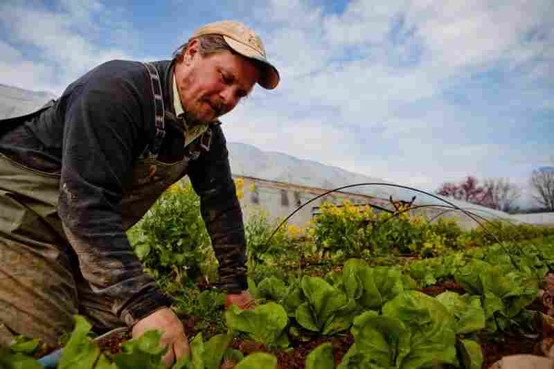 Zach Lester works in the field of his organic farm, Tree and Leaf Farm, in Unionville, Va., on March 16, 2011.