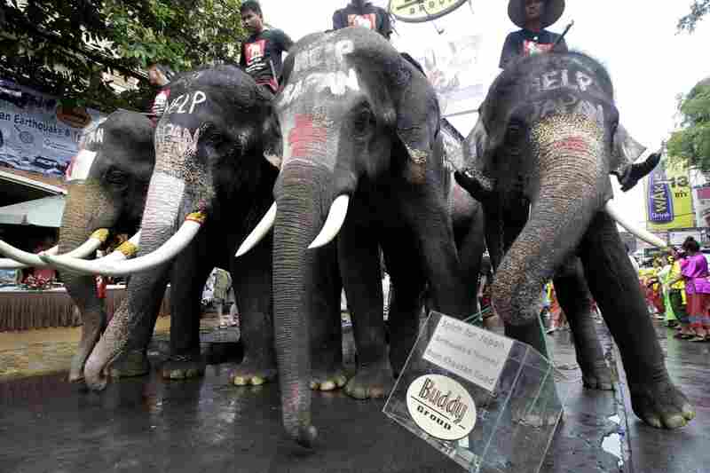 An elephant carries a donation box during a fundraising c