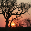 The sun setting over the African bush