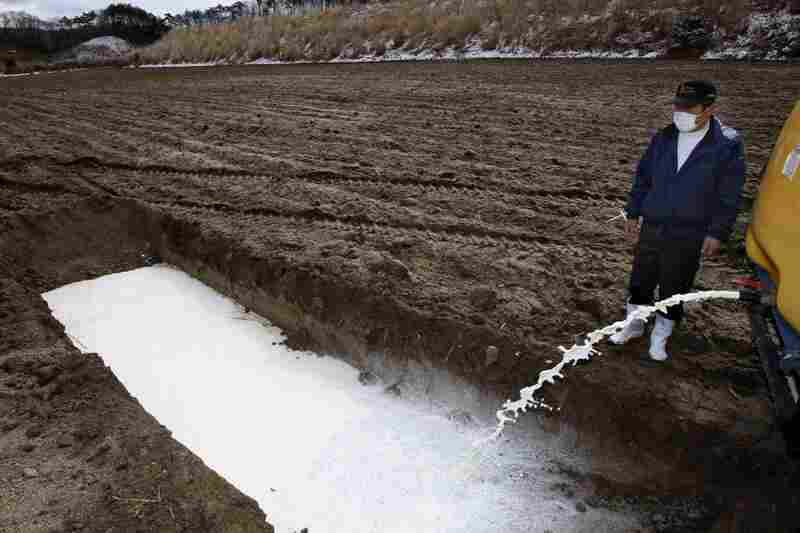 Dairy farmer Kenichi Hasegawa dumps milk in a corn field in Iitatemura, Fukushima prefecture, on Wednesday.