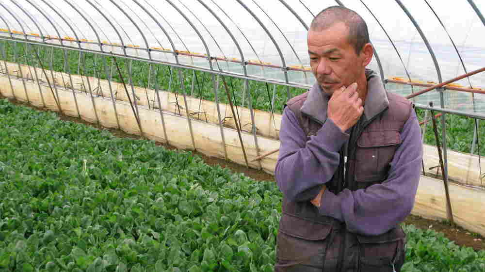 """Keiji Nagashima has been farming spinach in Ibaraki prefecture for 25 years but will be destroying this year's crop because of fears of radiation exposure. """"I can't have a life without the spinach,"""" he says."""