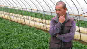 "Keiji Nagashima has been farming spinach in Ibaraki prefecture for 25 years but will be destroying this year's crop because of fears of radiation exposure. ""I can't have a life without the spinach,"" he says."