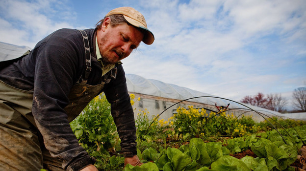 Zach Lester, seen here working in the field of Tree and Leaf Farm, grew the kale, chef Todd Woods cooked it, and Your Health podcast host Rebecca Davis got to eat it. (NPR)