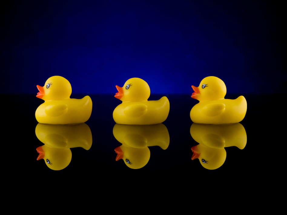 In 1992, 28,800 rubber ducks were lost at sea. What happened to them is the subject of Donovan Hohn's book <em>Moby-Duck</em>. (Jose Gil/iStockphoto.com)