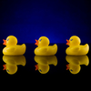 In 1992, 28,800 rubber ducks were lost at sea. What happened to them is the subject of Donovan Hohn's book Moby-Duck.
