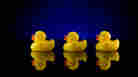 'Moby-Duck': When 28,800 Bath Toys Are Lost At Sea