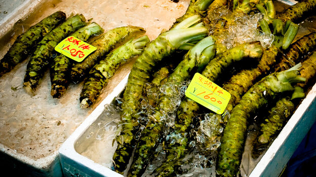 Wasabi plants, like these, in Fukushima prefecture were found to contain substantial amounts of radioactive iodine.